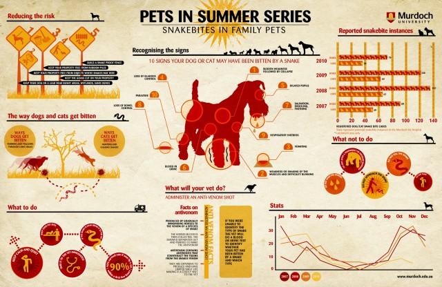 infographic_pet